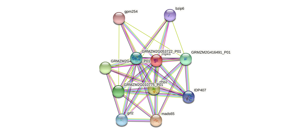 mpk6 protein (Zea mays) - STRING interaction network