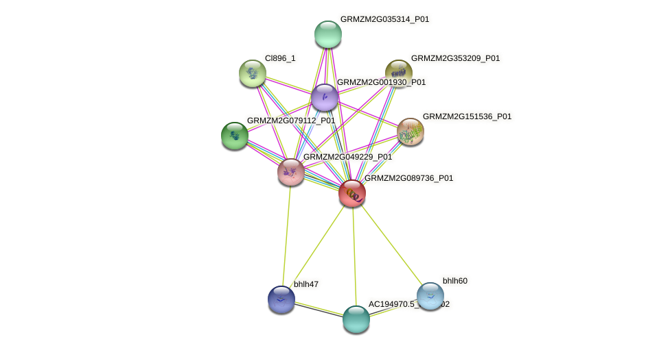 IDP204 protein (Zea mays) - STRING interaction network