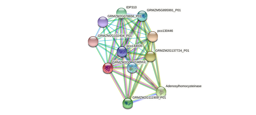 GRMZM2G089767_P01 protein (Zea mays) - STRING interaction network