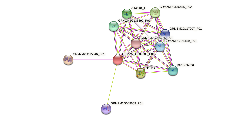 GRMZM2G089783_P01 protein (Zea mays) - STRING interaction network
