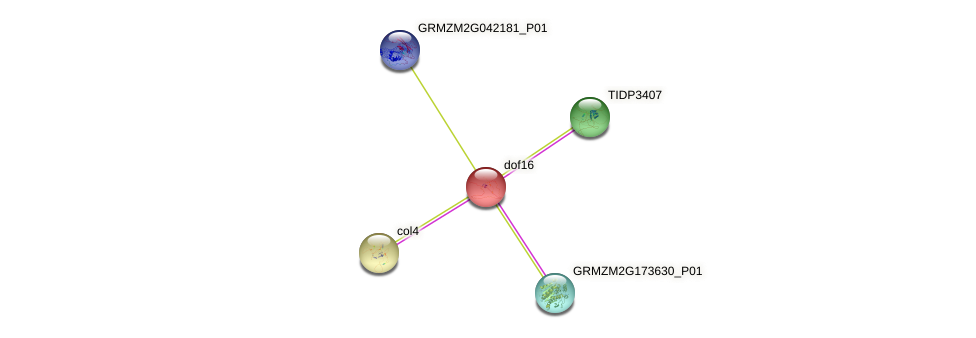 Zm.34711 protein (Zea mays) - STRING interaction network
