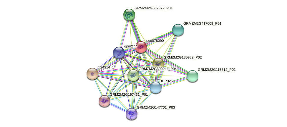 GRMZM2G089860_P01 protein (Zea mays) - STRING interaction network