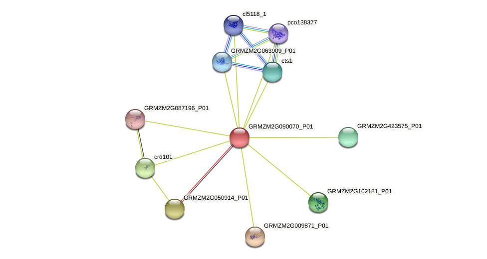 GRMZM2G090070_P01 protein (Zea mays) - STRING interaction network