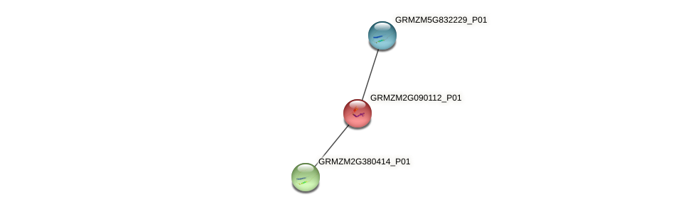 100275243 protein (Zea mays) - STRING interaction network