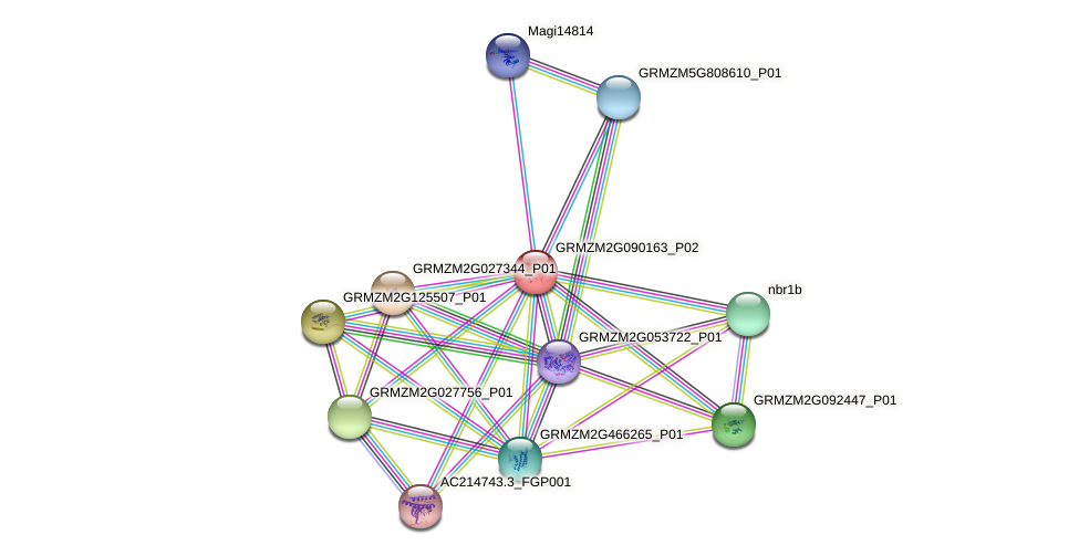 GRMZM2G090163_P02 protein (Zea mays) - STRING interaction network