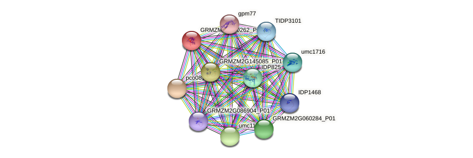 GRMZM2G090262_P01 protein (Zea mays) - STRING interaction network