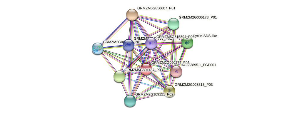 GRMZM2G090274_P01 protein (Zea mays) - STRING interaction network