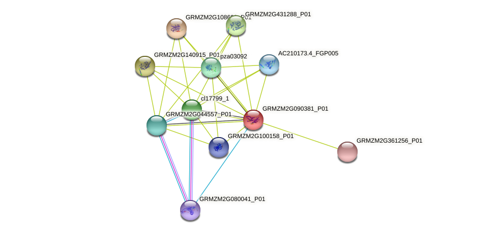 GRMZM2G090381_P01 protein (Zea mays) - STRING interaction network