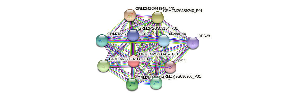 GRMZM2G090414_P01 protein (Zea mays) - STRING interaction network
