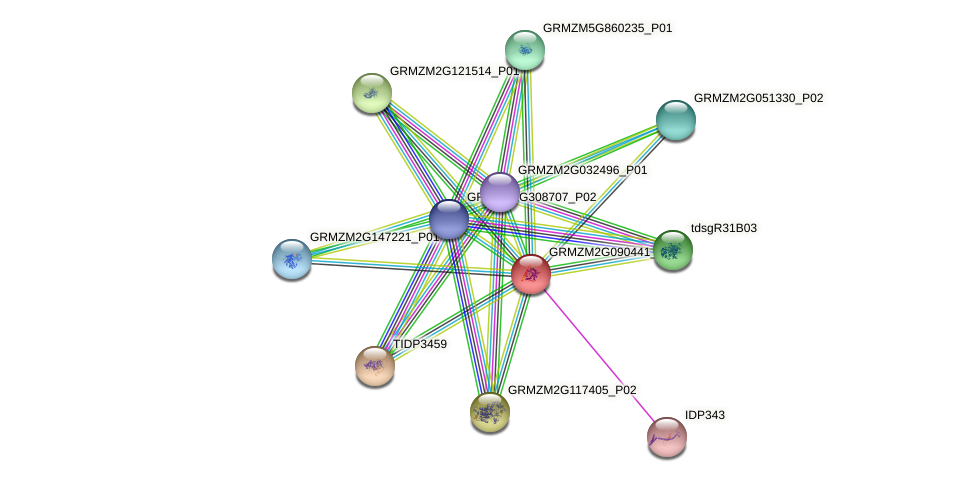 GRMZM2G090441_P01 protein (Zea mays) - STRING interaction network