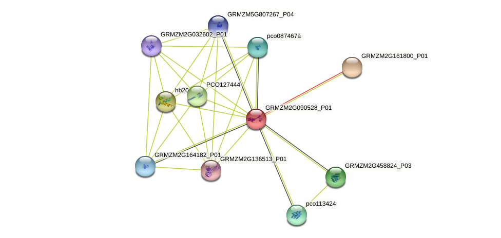 GRMZM2G090528_P01 protein (Zea mays) - STRING interaction network