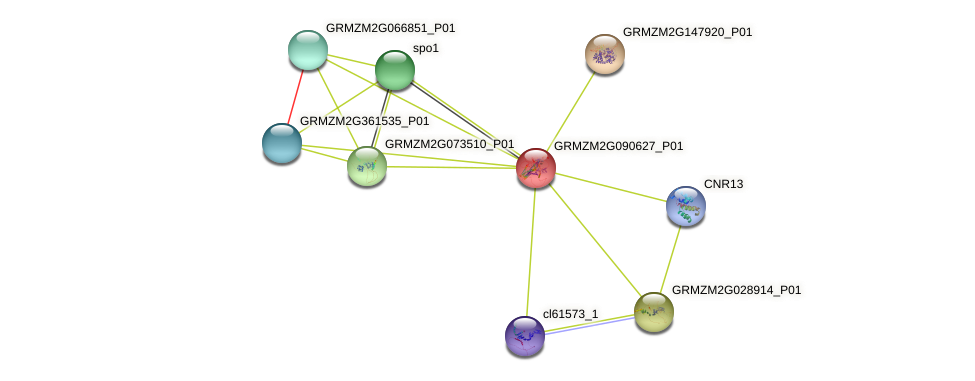 GRMZM2G090627_P01 protein (Zea mays) - STRING interaction network