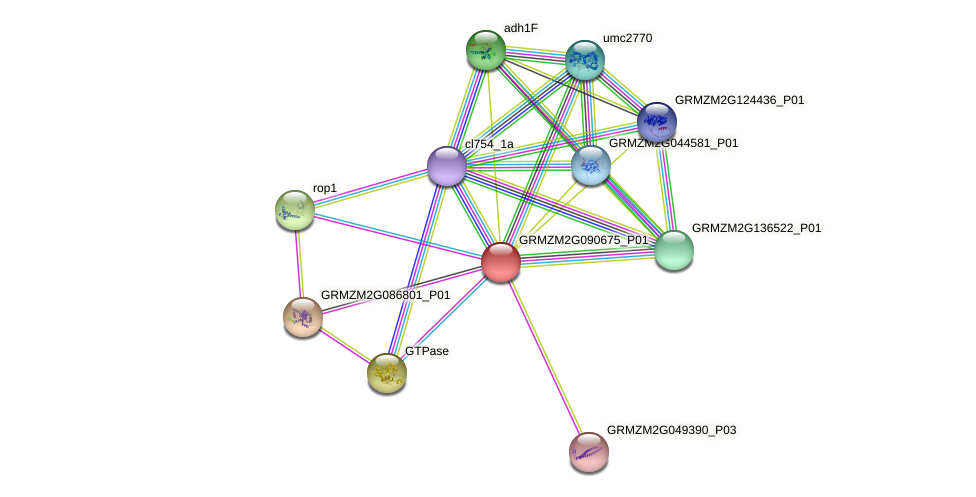 GRMZM2G090675_P01 protein (Zea mays) - STRING interaction network