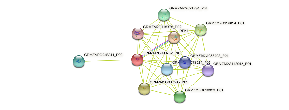 GRMZM2G090732_P01 protein (Zea mays) - STRING interaction network