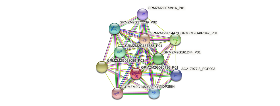 GRMZM2G090736_P01 protein (Zea mays) - STRING interaction network
