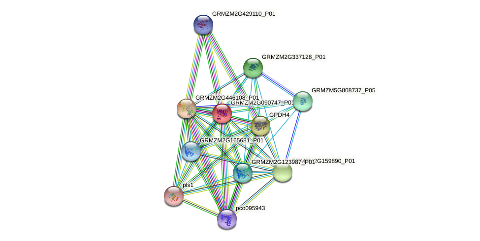 GRMZM2G090747_P01 protein (Zea mays) - STRING interaction network