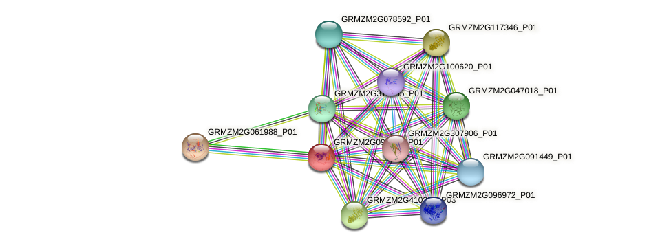 GRMZM2G090869_P01 protein (Zea mays) - STRING interaction network