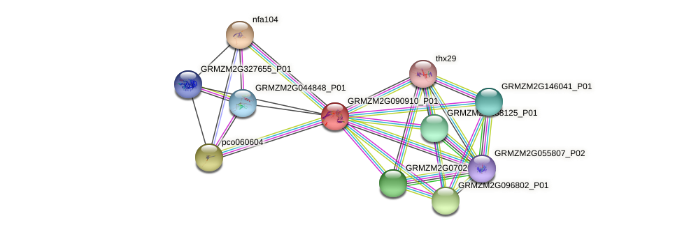 GRMZM2G090910_P01 protein (Zea mays) - STRING interaction network