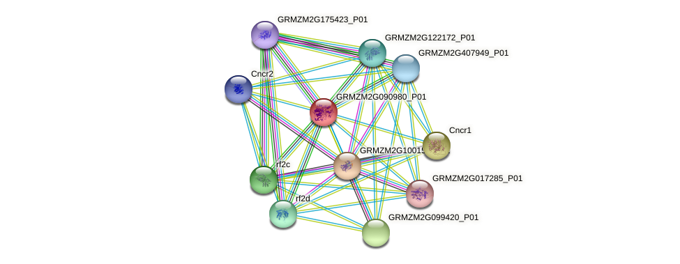 GRMZM2G090980_P01 protein (Zea mays) - STRING interaction network
