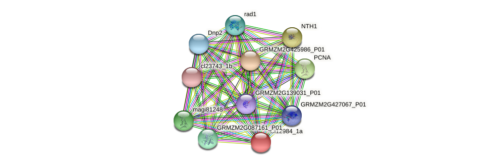 GRMZM2G091006_P01 protein (Zea mays) - STRING interaction network