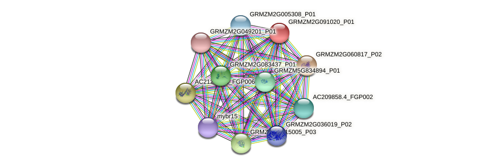 GRMZM2G091020_P01 protein (Zea mays) - STRING interaction network