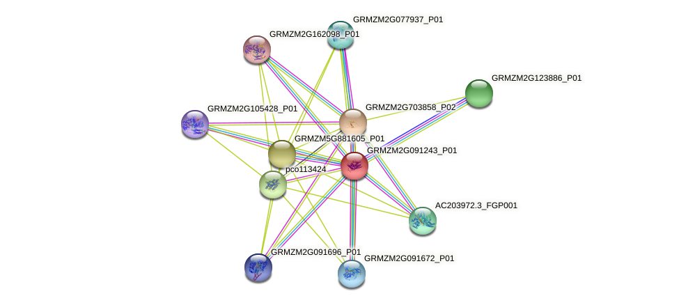 GRMZM2G091243_P01 protein (Zea mays) - STRING interaction network