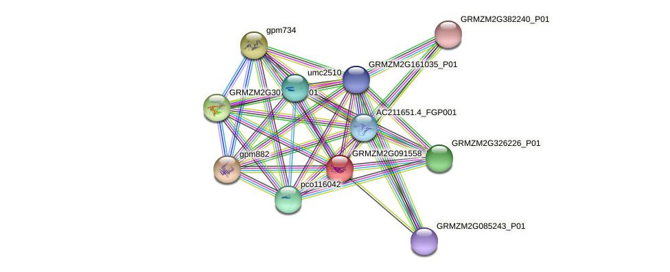 GRMZM2G091558_P01 protein (Zea mays) - STRING interaction network