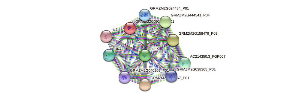 GRMZM2G091563_P01 protein (Zea mays) - STRING interaction network
