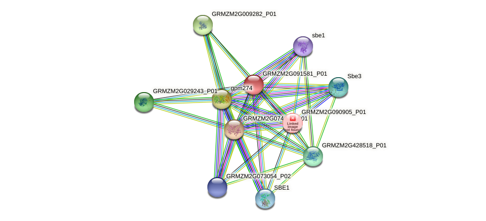 GRMZM2G091581_P01 protein (Zea mays) - STRING interaction network