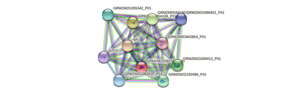 GRMZM2G091595_P01 protein (Zea mays) - STRING interaction network