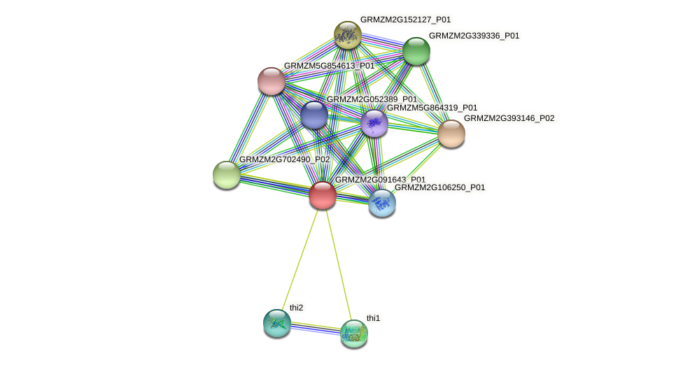 GRMZM2G091643_P01 protein (Zea mays) - STRING interaction network