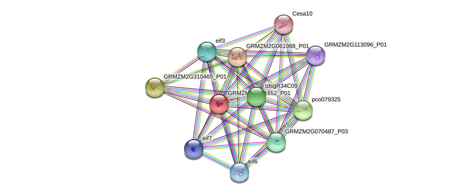 GRMZM2G091652_P01 protein (Zea mays) - STRING interaction network