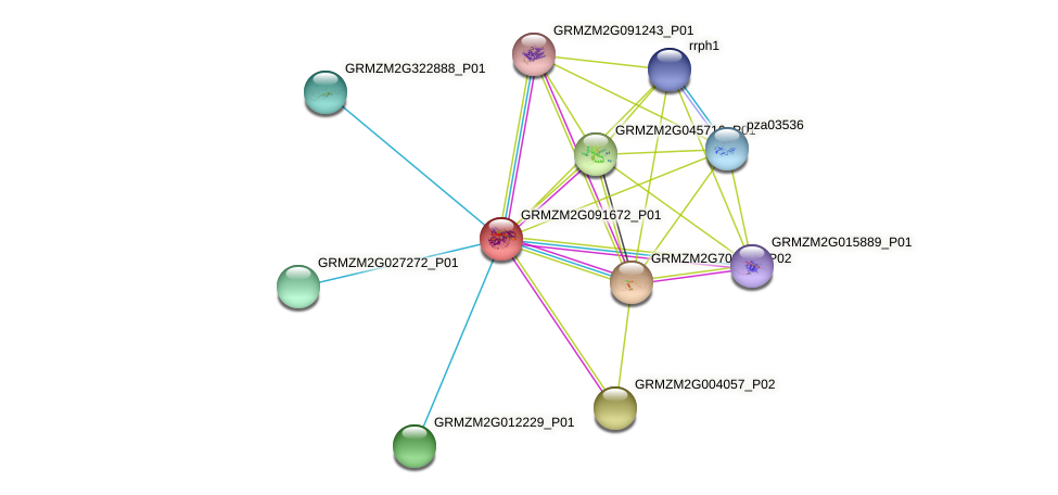 GRMZM2G091672_P01 protein (Zea mays) - STRING interaction network