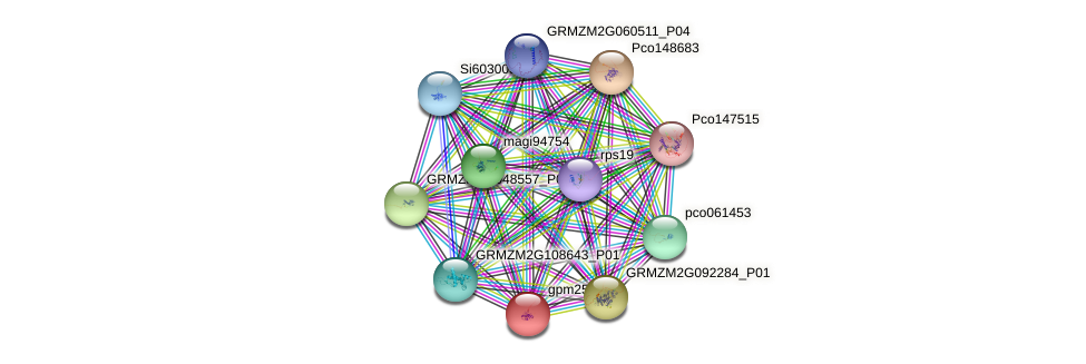 ZCN1 protein (Zea mays) - STRING interaction network