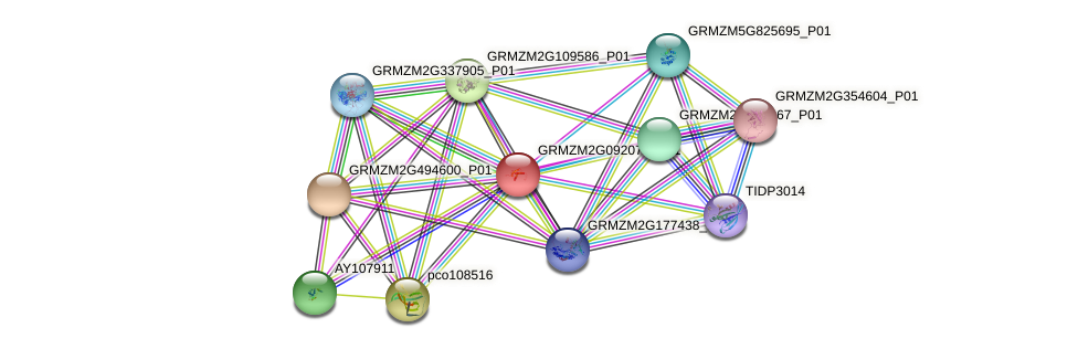 GRMZM2G092072_P01 protein (Zea mays) - STRING interaction network
