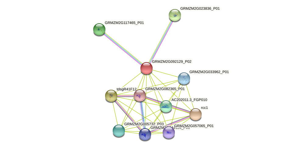 Zm.7828 protein (Zea mays) - STRING interaction network