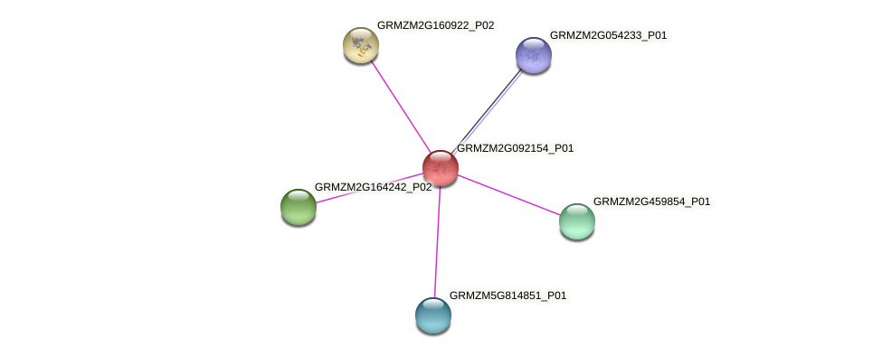 GRMZM2G092154_P01 protein (Zea mays) - STRING interaction network
