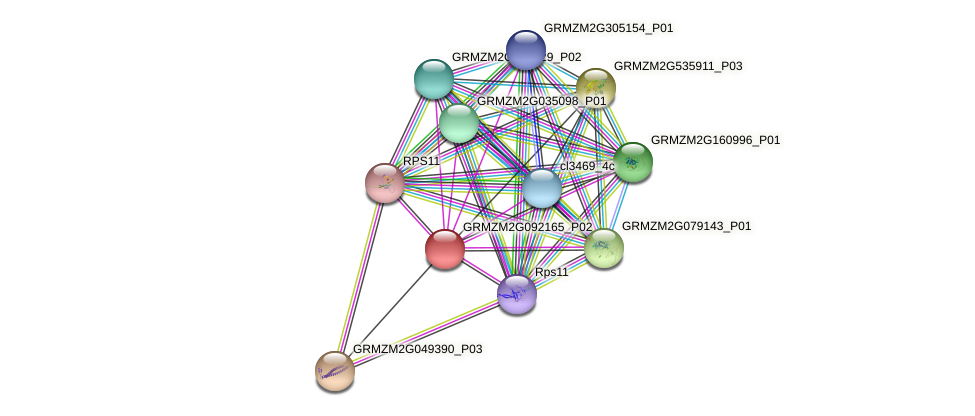 GRMZM2G092165_P02 protein (Zea mays) - STRING interaction network
