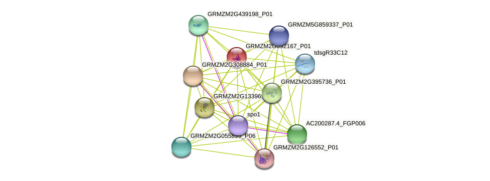 100194299 protein (Zea mays) - STRING interaction network