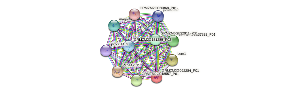 GRMZM2G092284_P01 protein (Zea mays) - STRING interaction network