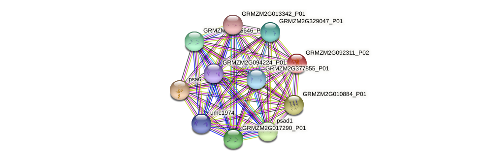 GRMZM2G092311_P02 protein (Zea mays) - STRING interaction network