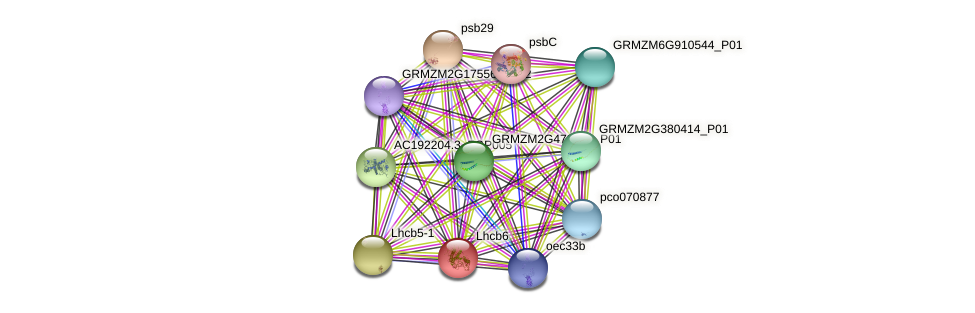 Zm.41417 protein (Zea mays) - STRING interaction network