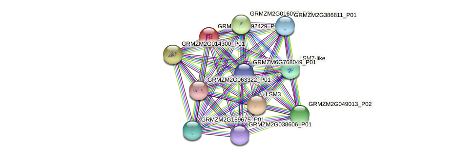 GRMZM2G092429_P05 protein (Zea mays) - STRING interaction network
