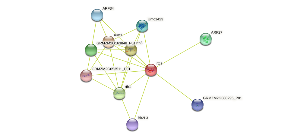 rtcs protein (Zea mays) - STRING interaction network