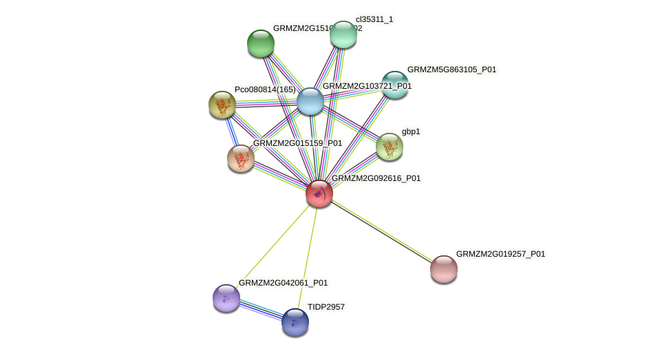 Zm.29882 protein (Zea mays) - STRING interaction network