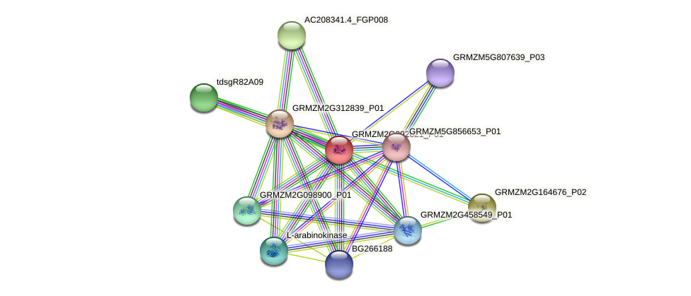 GRMZM2G092621_P01 protein (Zea mays) - STRING interaction network