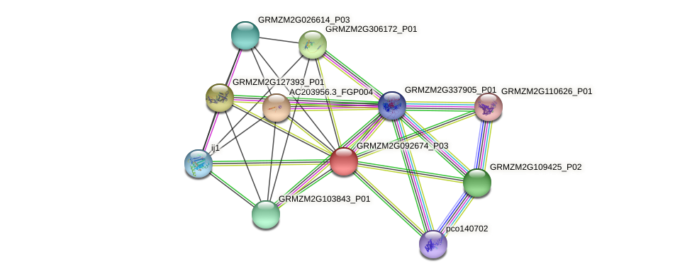 GRMZM2G092674_P03 protein (Zea mays) - STRING interaction network