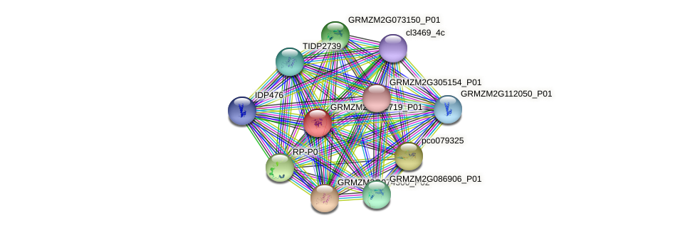GRMZM2G092719_P01 protein (Zea mays) - STRING interaction network