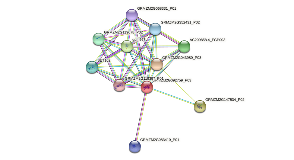 GRMZM2G092759_P03 protein (Zea mays) - STRING interaction network