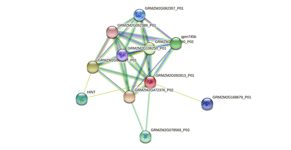 GRMZM2G092813_P01 protein (Zea mays) - STRING interaction network
